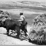 Karliova_da-Kizakla-Ot-Tasima,-1979(1)