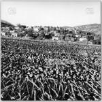 Mese-Agaclari,-1978(1)