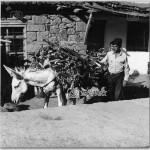 Mese-Agaclari,-1978(3)